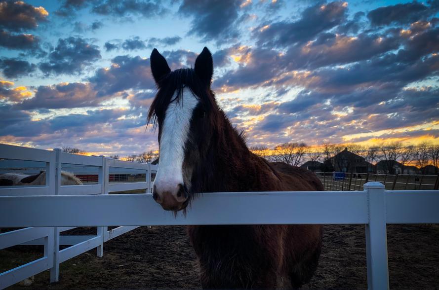 Celina-Texas-Horse-Jessie.png