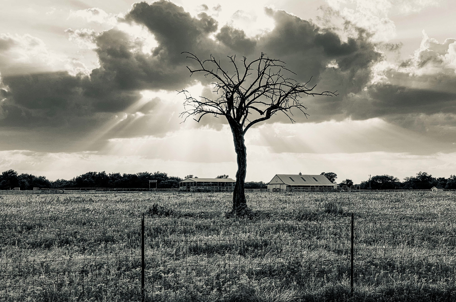 Celina-Texas-Tree-With-Clouds.png