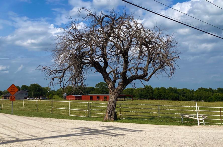 Celina-Texas-Weathered-Tree.png