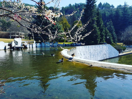 Весна в Болгарии