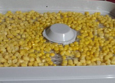 Dehydrating frozen corn