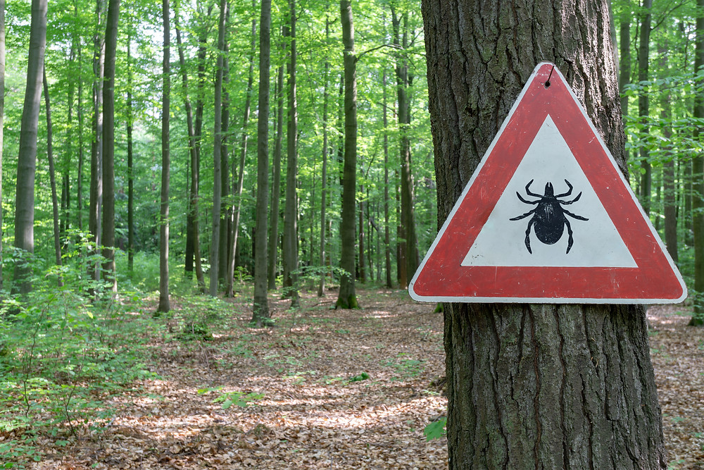 Tick warning sign posted on tree in woods.