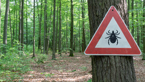 Why you need to have lots of  bug spray and hydrocortisone cream in your bug out bag!