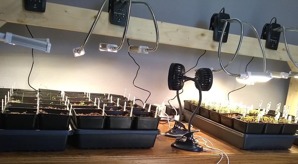 Vegetable seedlings in potting trays underneath grow lights