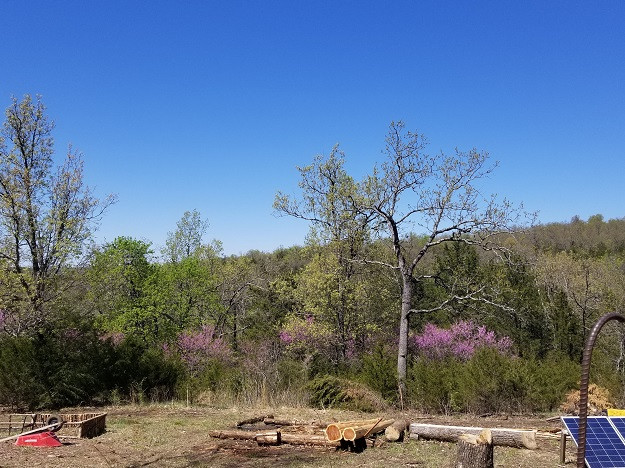 View from the fire pit. Hills atop the Ozark Mountains.