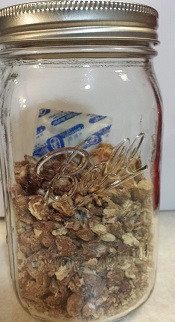 Dehydrated pinto beans stored in a mason jar