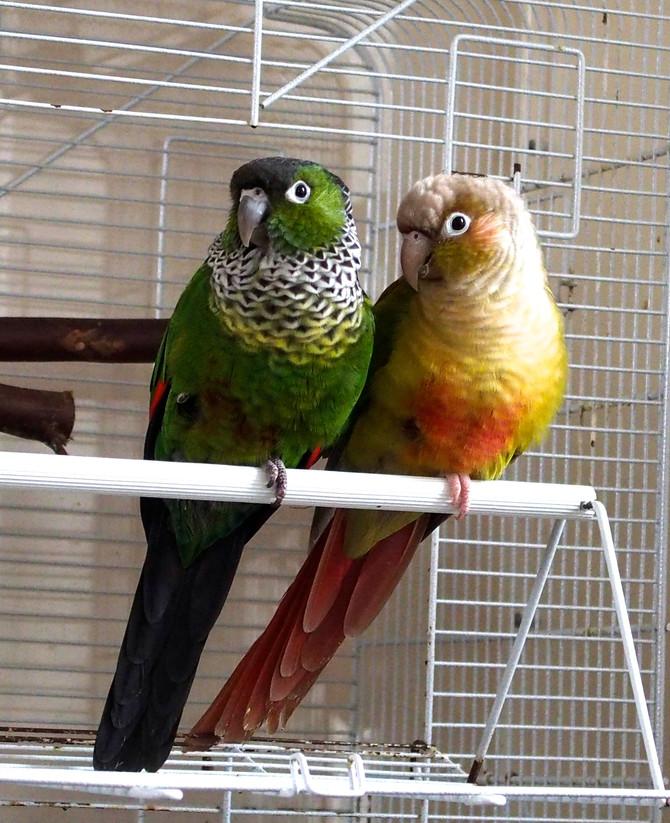 写真 お題「鳥」