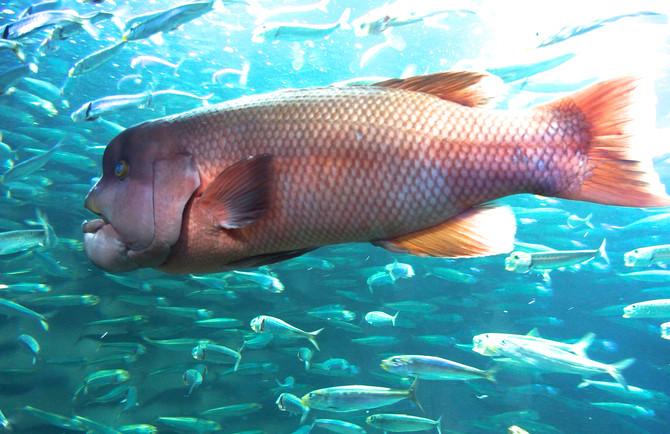 写真「水の中の生き物 1」