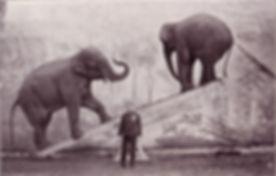 George_Lockhart_elephants.jpg