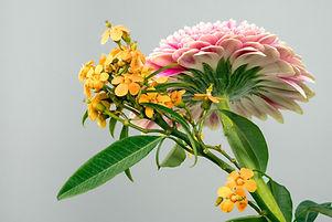 Exoctic Flowers