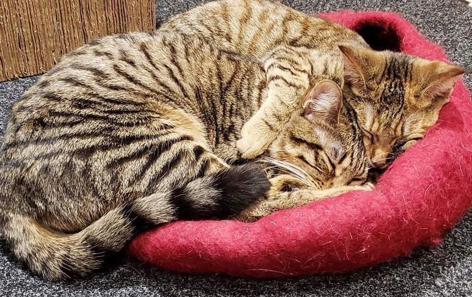 ANJELLICLE CATS RESCUE | NEW YORK CITY CAT RESCUE | NO-KILL SHELTER
