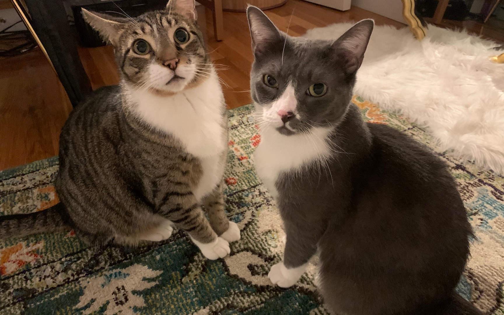 BOOMER & OLIVER