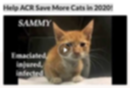 Help ACR Save More Cats in 2020!