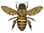 Gold and black intricately designed honey bee