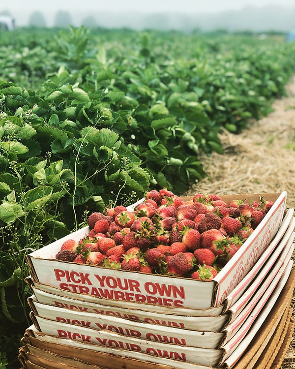 Strawberries for Ice Cream.JPG