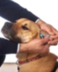 ClearDropper ear drops for dogs