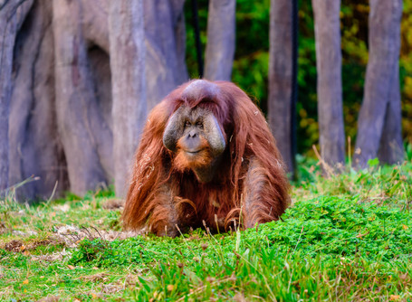 DUBLIN ZOO | AMAZING PHOTO EXPERIENCE