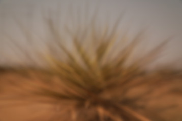 Desert Heat #1