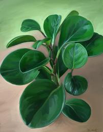 Pepperonis Obtusifolia