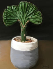 Coral Cactus
