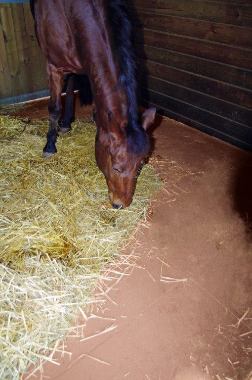 dalle-en-caoutchouc-pour-box-chevaux-25-mm-couleur-vert-nombre-de-m2-20-m2-[3]-9717-p