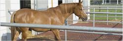 pour_chevaux_1