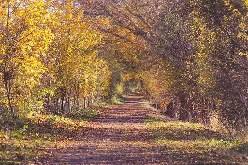 Autumn on the Ayot Greenway