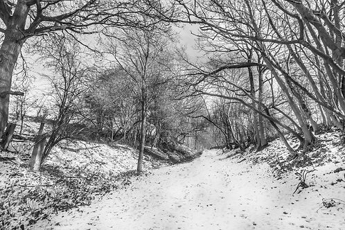 Ayot Greenway in the Snow, Wheathampstead