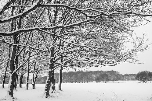 Snow on Mid Herts Golf Course