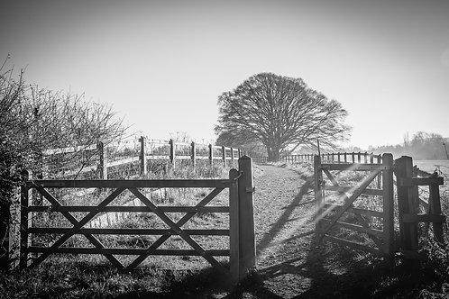 Go Through the Gate (black&white)