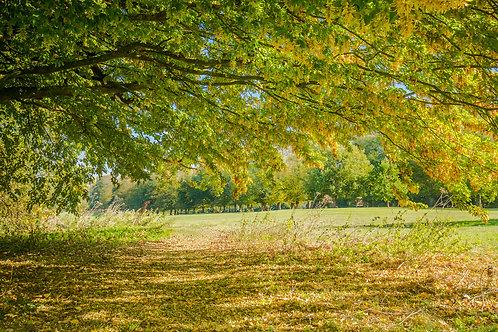 Autumn in Rothampstead