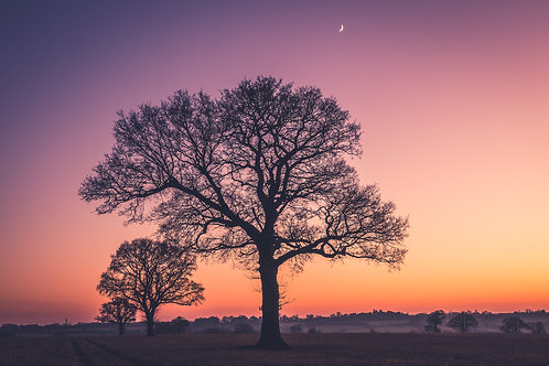 3 Trees at Sunset