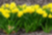 DSC01075_crop.jpg
