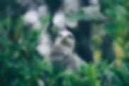 Eifelpark Gondorf übernachten, Übernachten Köln, Unterkunft Umgebung Köln, Unterkunft Umgebung Aachen, Unterkunft an er belgischen Grenze, Unterkunft am Westwall, Westwall, Kronenburger See, Ruhrsee Unterkunft, Ruhrsee, Jünkerath, Obere Kyll, Freilinger See, Urlaub mit Kindern, Kinderfreundliches Haus, Haus mit Garten, Ferienhaus mit Grillplatz, Ferienhaus mit Sauna, Wellnessurlaub Eifel, Kyll, Eifeltourismus, Eifel, Ferien mit Kindern