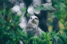 Actuamos frente a la pérdida de la biodiversidad