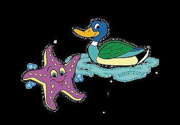 Starfish/Duck