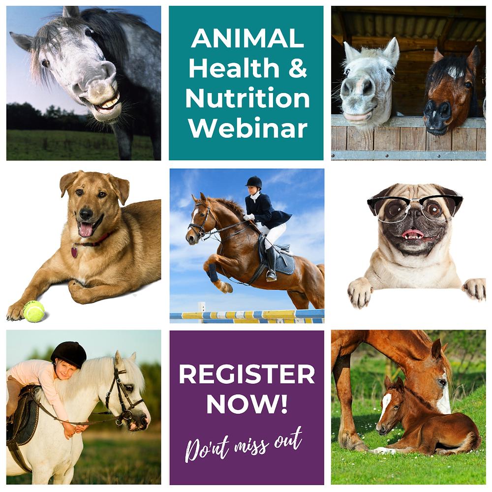 Animal Health Webinar