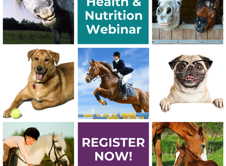 Hair Tissue Mineral Analysis in Veterinary Practice and Animal Care Webinar - Aug 25th 7.30pm