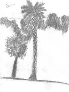 jyoti charcoal.jpg
