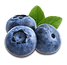 blueberry-2.png
