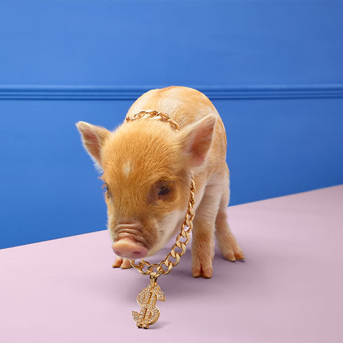 Shot-3-Pig-with-Chain-2033_RT.jpg