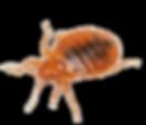 HPC Bedbugs.jpg
