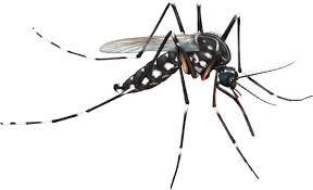 Controlling Zika