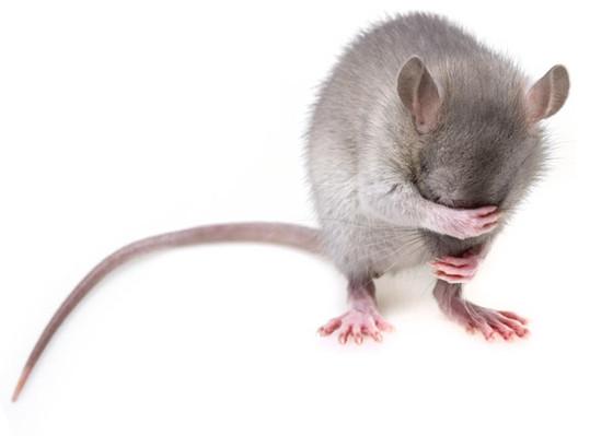 I Think I Saw a Mouse