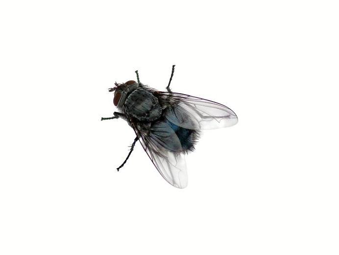Termite1.png