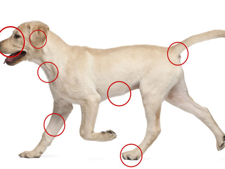 How To Check Your Dogs For Ticks