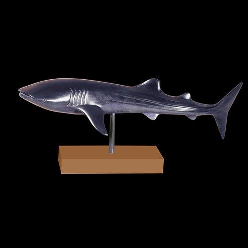 Requin Baleine (2001)