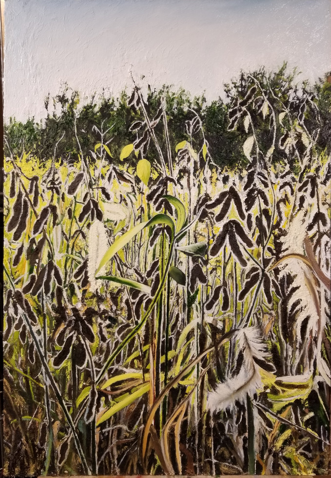 Soybeans and Foxtails.jpg