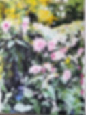 Pink Dahlias, Giverny 30 x 22 in., Paste