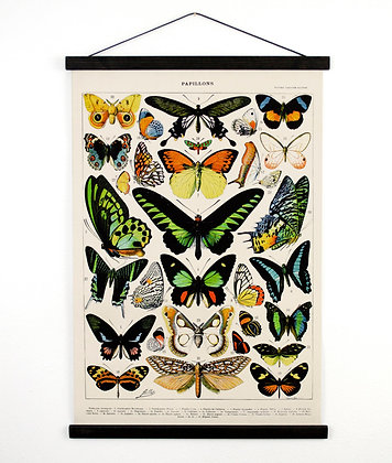 Pull Down Chart - Vintage Butterfly Handmade reproduction print. Vintage Science